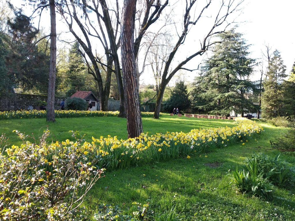 Fotografia parco senza HDR